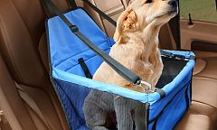 a Pet Car Booster Seat