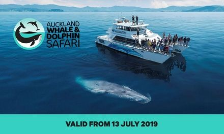 Whale Watching Experience: Child, Adult or Family with Auckland Whale & Dolphin Safari