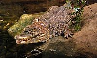 Crocodile Cruise, Bird Watching Deals for only Rs.1500 instead of Rs.1500